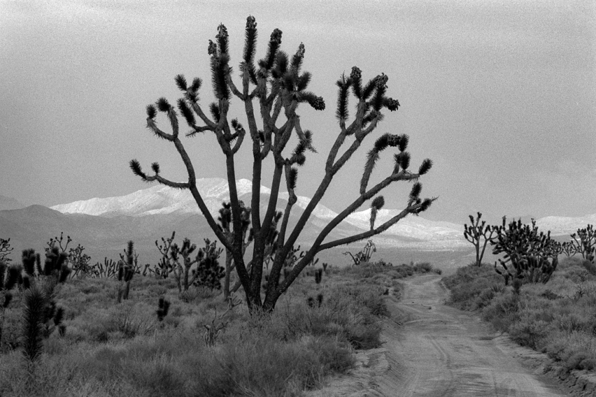 detours-2-overson-mojave-scenic-from-detours88